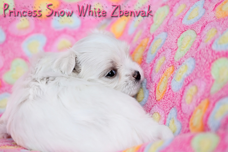 Princess Snow White Zbenvak 1