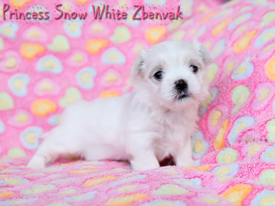 Princess Snow White Zbenvak 4