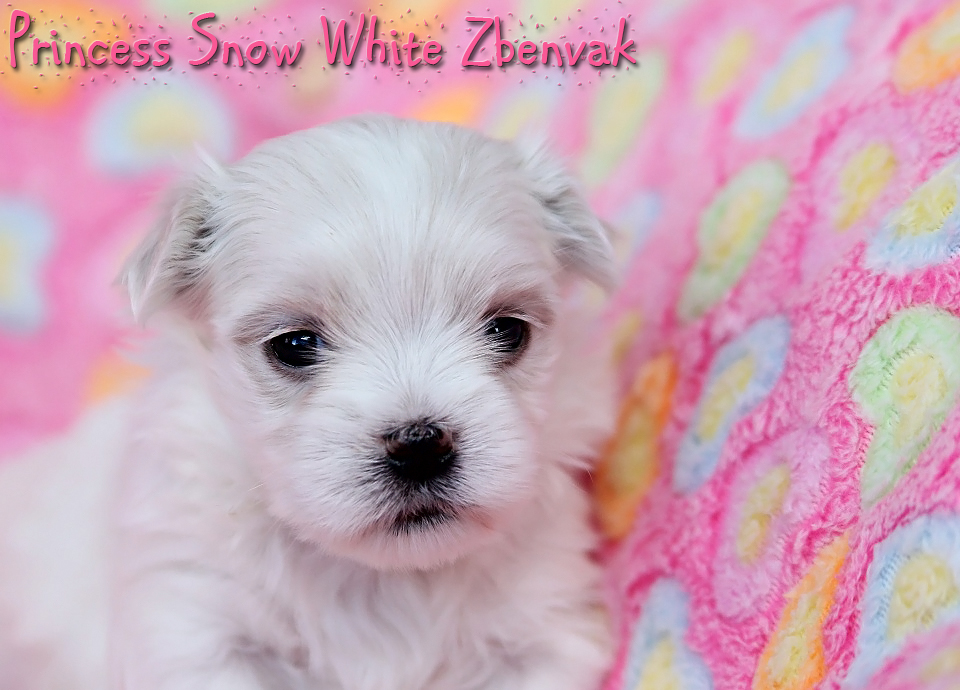 Princess Snow White Zbenvak 6