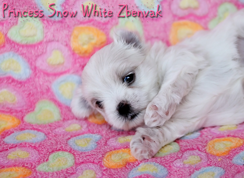 Princess Snow White Zbenvak 8