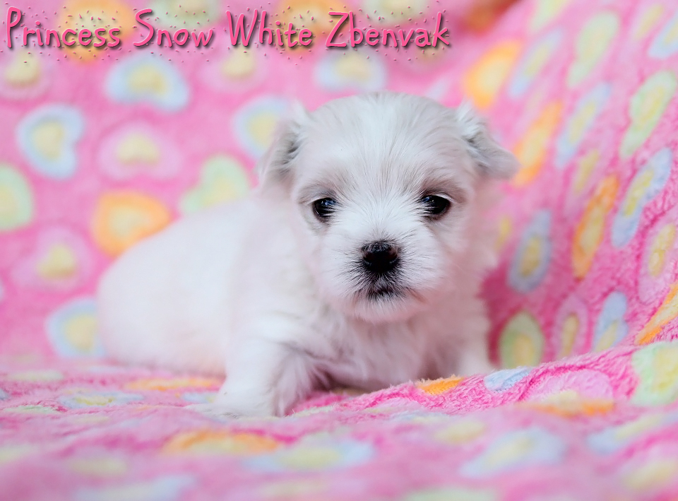 Princess Snow White Zbenvak 9