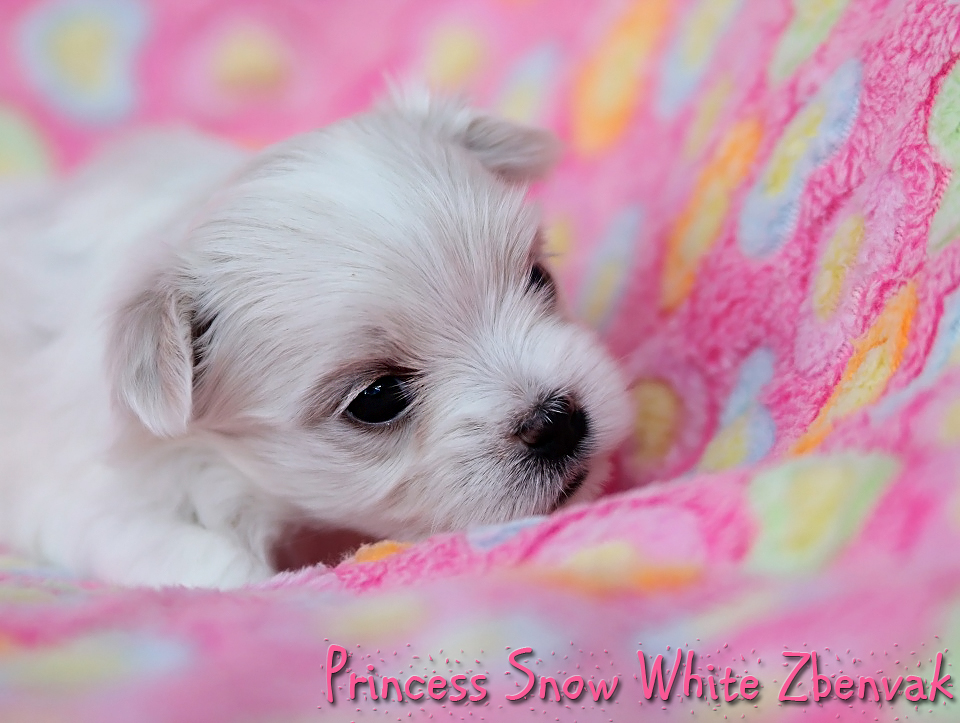 Princess Snow White Zbenvak 11